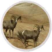 Two Male Rams At Zion Round Beach Towel by Jeff Swan