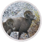 Two Male Rams Round Beach Towel