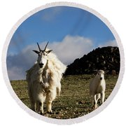 Two Mountain Goats Oreamnos Americanus Round Beach Towel