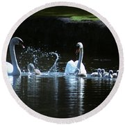Two Mute Swans With Young Cygnus Olor Round Beach Towel