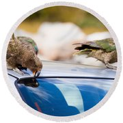 Two Nz Alpine Parrot Kea Trying To Vandalize A Car Round Beach Towel
