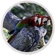 Two On A Branch Round Beach Towel