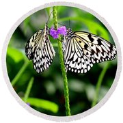 Two Paper Kite Or Rice Paper Or Large Tree Nymph Butterfly Also Known As Idea Leuconoe Round Beach Towel