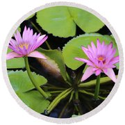 Two Pink Water Lilies Round Beach Towel