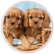 Two Puppies In Woven Basket Dp709 Round Beach Towel