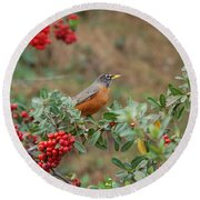 Two Robins Eating Berries Round Beach Towel