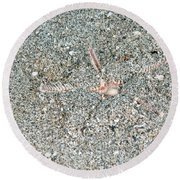 Two-spined Sea Star Round Beach Towel