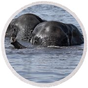 Two Swimming Elephants Round Beach Towel