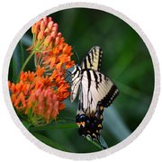 Two-tailed Swallowtail Round Beach Towel
