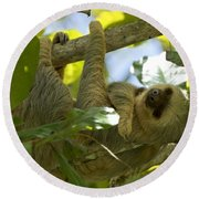 Two-toed Sloth Relaxing With A Grin Round Beach Towel
