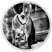 Two Tone Toby-jack Russell Round Beach Towel