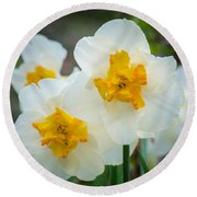 Two-toned Daffodils Round Beach Towel