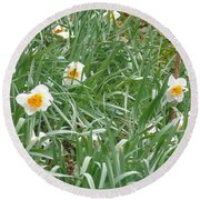Two Toned Daffodils Round Beach Towel