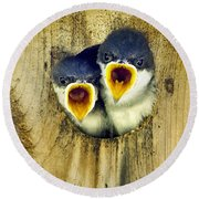 Two Tree Swallow Chicks Round Beach Towel