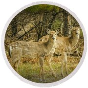 Two White Tailed Deer Round Beach Towel