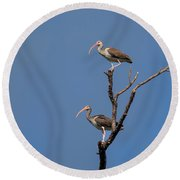 Two Youngsters In A Tree Round Beach Towel