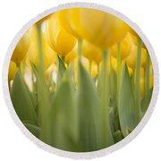 Under Yellow Tulips Round Beach Towel