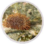 Underwater Shot Of Sea Urchin On Submerged Rocks Round Beach Towel