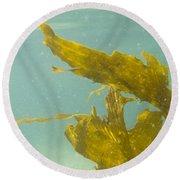 Underwater Shot Of Seaweed Plant Floating Leaves Round Beach Towel