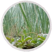 Underwater Shot Of Submerged Grass And Plants Round Beach Towel