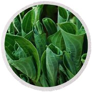 Unfurling Of The Hosta Round Beach Towel