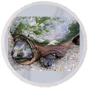 Up From The Pond Round Beach Towel