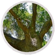 Up In The Trees Round Beach Towel
