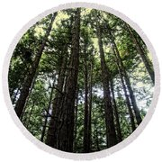 Up Through The Trees Round Beach Towel
