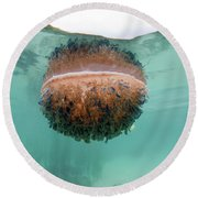 Upside-down Jellyfish Cassiopea Round Beach Towel