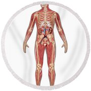 Urinary, Skeletal & Muscular Systems Round Beach Towel