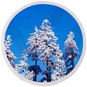 Usa, Oregon, Pine Trees, Winter Round Beach Towel