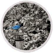 Vagabon Blue Bird Round Beach Towel
