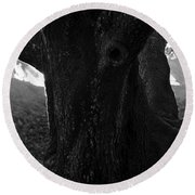 Valley Of The Oak Round Beach Towel