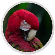 Vanity-close Up Of A Green Winged Macaw Round Beach Towel