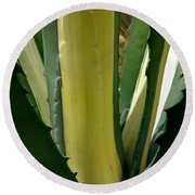 Variegated Agave Round Beach Towel