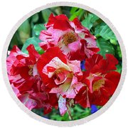 Variegated Multicolored English Roses Round Beach Towel