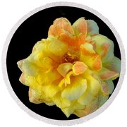 Variegated Yellow Rose Round Beach Towel