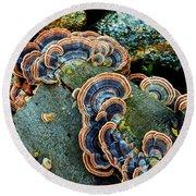 Velvet Wild Mushrooms  Round Beach Towel