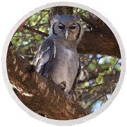 Verreauxs Eagle Owl In Tree Round Beach Towel