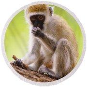 Vervet Monkey Round Beach Towel