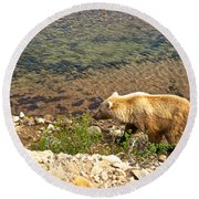 Very Light-colored Grizzly Bear In Moraine River In Katmai Nnp-ak Round Beach Towel
