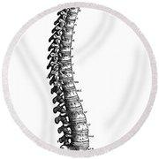 Vesalius: Spine, 1543 Round Beach Towel