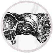 Vesalius: Uterus, 1543 Round Beach Towel