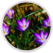 Vibrant Crocuses Round Beach Towel by Karol Livote