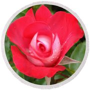 Vibrant Red Rose Round Beach Towel