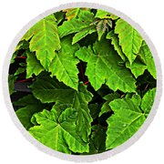 Vibrant Young Maples - Acer Round Beach Towel
