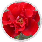 Vibrantly Red Rose Round Beach Towel