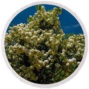 Viburnum Opulus Compactum Bush With White Flowers Round Beach Towel