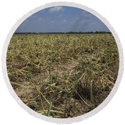 Vidalia Georgia Onion Fields Round Beach Towel