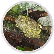 Vietnamese Mossy Frog Round Beach Towel
